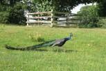 Bradgate Park, Leicestershire.