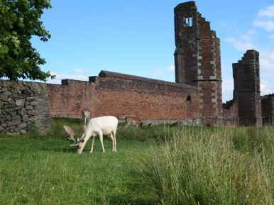Ruins of Bradgate House, Bradgate Park, Leicestershire.