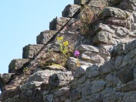 Edinburgh: Craigmillar Castle.